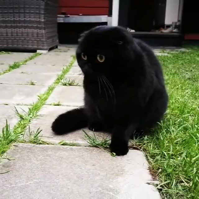 Watch and share Hold My Catnip GIFs and Funny GIFs by RespectMyAuthoriteh on Gfycat