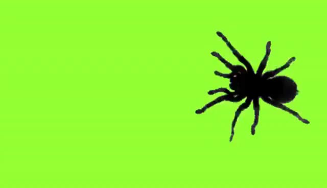 Watch and share Spider Green Screen GIFs on Gfycat