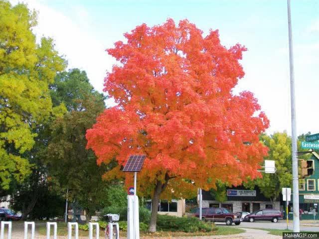 Watch and share Four Seasons Tree GIFs on Gfycat