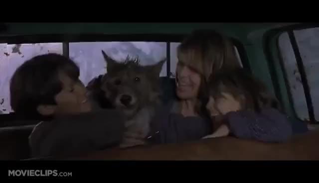 Watch Successful Pierce Brosnan GIF on Gfycat. Discover more dantes peak, driving, pierce brosnan GIFs on Gfycat