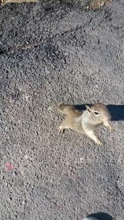 Watch Squirrel Whisperer GIF on Gfycat. Discover more aww GIFs on Gfycat