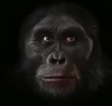 Watch and share Human Evolution GIFs by blyatmanurod on Gfycat