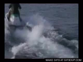 Watch sharks GIF on Gfycat. Discover more related GIFs on Gfycat