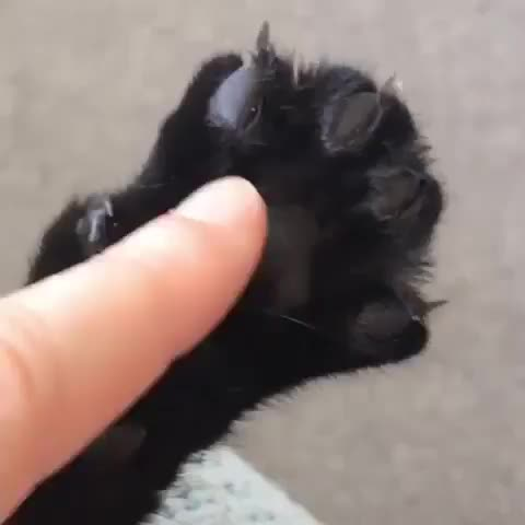 Watch and share Cat GIFs on Gfycat
