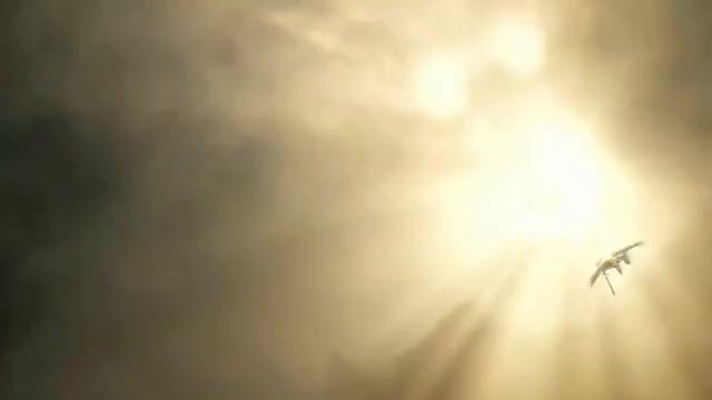 Watch FINAL FANTASY GIF on Gfycat. Discover more FFXIV, Mmo, ff14, finalfantasy, heavensward, shadowbringers, stormblood GIFs on Gfycat