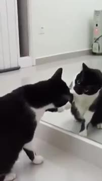 Watch and share This Cat Sees Himself In The Mirror GIFs on Gfycat