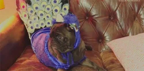 Watch Edgar + Costumes GIF on Gfycat. Discover more bro, broarmy, costumes, dog, edgar, edgar pug, felix kjellberg, funny, funny animals, internet, mine, pdp, pewdie, pewdiepie, pewds, pug, youtube, youtuber GIFs on Gfycat