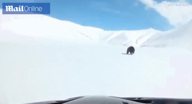 Watch and share Bear GIFs by /r/Dashcamgifs on Gfycat