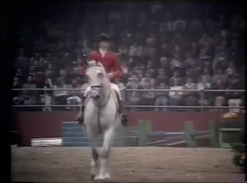 Watch Nick Skelton GIF on Gfycat. Discover more nick skelton GIFs on Gfycat