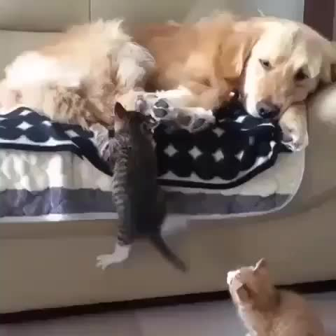 Found the purrfect plact to nap GIFs