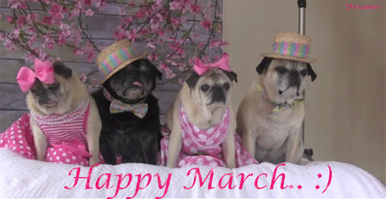 Image result for happy march . pets