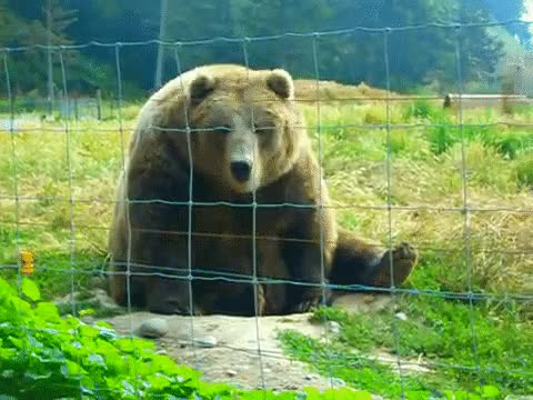 Watch and share Bear Waving GIFs on Gfycat