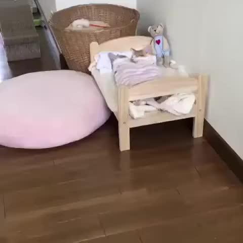KarmaConspiracy, aww, awww, cat, cute, kitten, kitty, Cute Kitties Sleeping Together GIFs