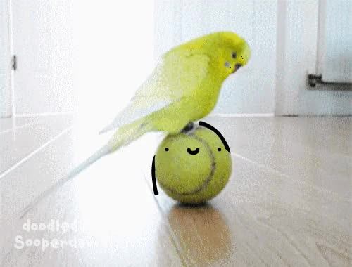 Watch and share Real Life Doodles GIFs and Bird GIFs by sooperdavid on Gfycat