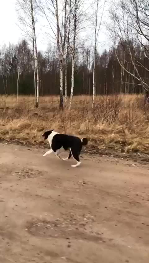 Watch and share Suse. Graciozi. 30 Km/h. GIFs on Gfycat