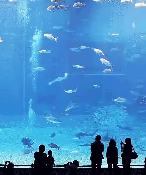 Watch and share Aquarium Animated GIFs on Gfycat