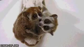 Watch and share Snuggle GIFs on Gfycat