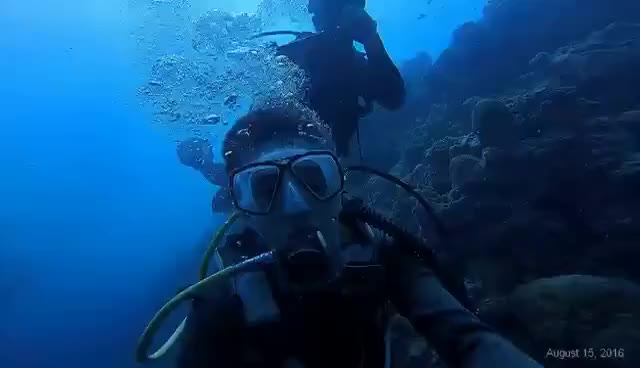 Watch Scuba Diving in Moalboal Cebu |HD GIF on Gfycat. Discover more related GIFs on Gfycat