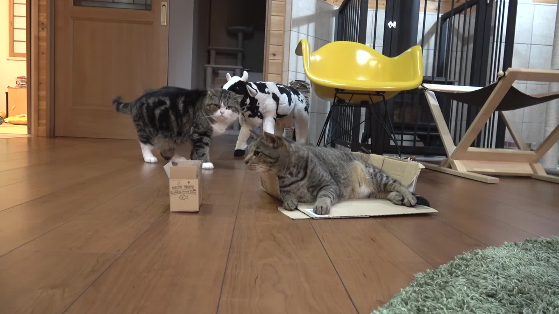Maru is NOT amused GIFs