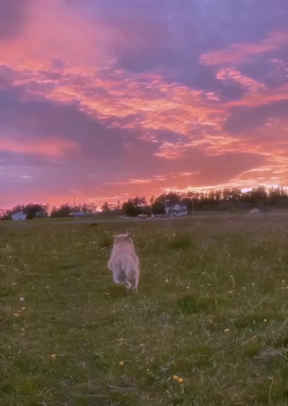 Watch and share The Happiest Pup On Planet Earth GIFs by mayaxs on Gfycat