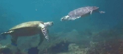 High Five Sea Turtles GIFs
