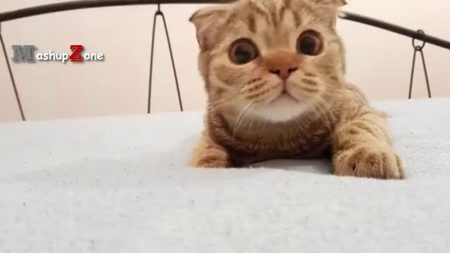 Top 10 Funny Cat Videos Funny Cats 2017 Gif Find Make Share