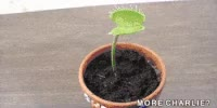 Watch Plante Carnivore Mouche GIF on Gfycat. Discover more related GIFs on Gfycat