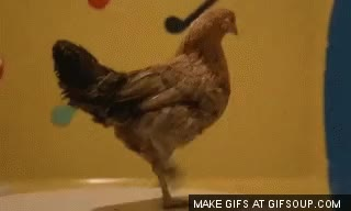 Watch this chicken GIF on Gfycat. Discover more animals, bird, chicken, chicken dance, chicken nuggets, food GIFs on Gfycat