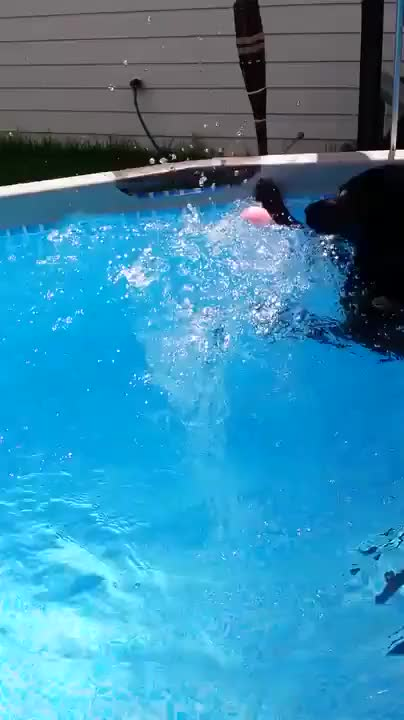 Watch and share Hadley Walking In The Pool GIFs by somi on Gfycat