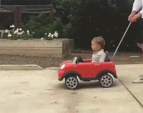 Watch rc car dog GIF by @notlydia on Gfycat. Discover more doggy, rctoy GIFs on Gfycat