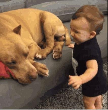 babydoggifs, cutegifs, doggy,  GIFs