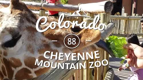 Watch 100 Reasons Colorado is Awesome!#88- The Cheyenne Mountain Z GIF on Gfycat. Discover more Cheyenne Mountain Zoo, awsmco, cheyennemountainzoo, colorado, coloradosprings, thosegiraffestho, wild, zoo GIFs on Gfycat