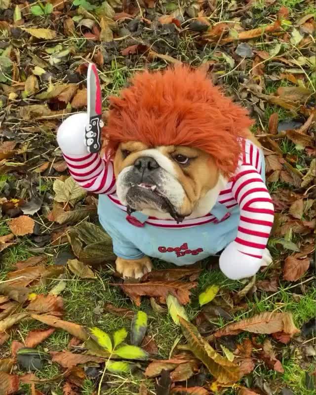 Chucky is here 😱...RUN!!🏃♀️🤣