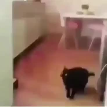 cat, dank, funny, meme, video, black cat dank meme vine GIFs