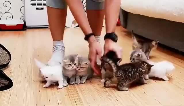 10 kittens GIFs