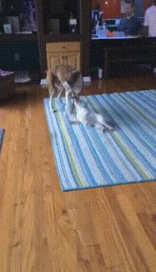 Watch this GIF on Gfycat. Discover more StoppedWorking, hitmanimals GIFs on Gfycat