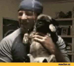 Watch jokes GIF on Gfycat. Discover more AnimalsBeingJerks GIFs on Gfycat