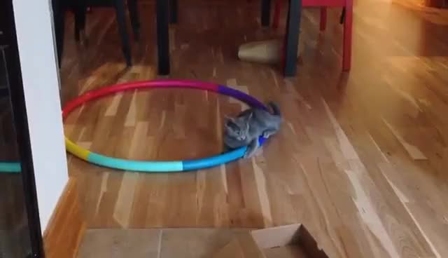Watch and share Hula Hoop GIFs and Cat GIFs on Gfycat