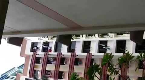 Singapore Suicide GIFs