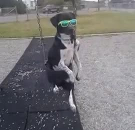 Watch and share Dog Dancing GIFs on Gfycat