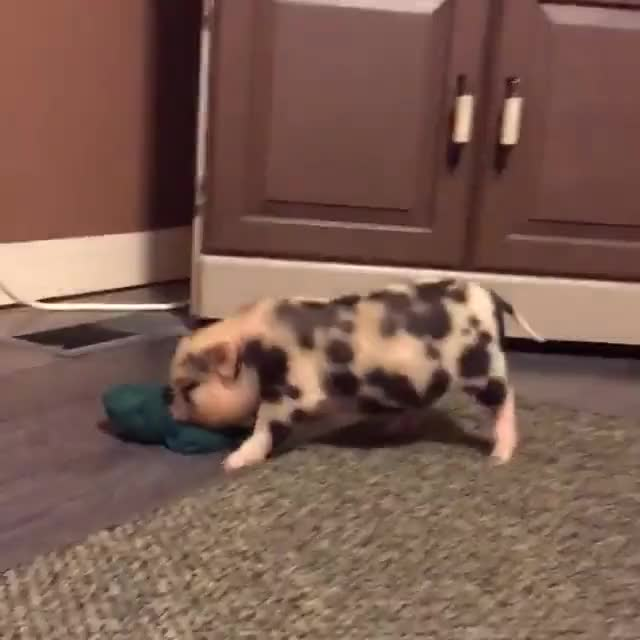 Watch and share Livekindly GIFs and Govegan GIFs by b12ftw on Gfycat