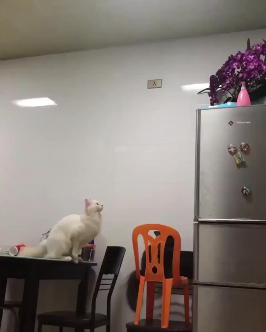 "cat, jump, ""I can totally make this jump"" - Cat GIFs"