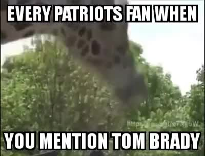 Watch and share LMAO GIRAFFE GIVING BJ TO A POLE ACTING LIKE EVERY NEW ENGLAND PATRIOTS FAN WHEN THEY HEAR TOM BRADY GIFs on Gfycat
