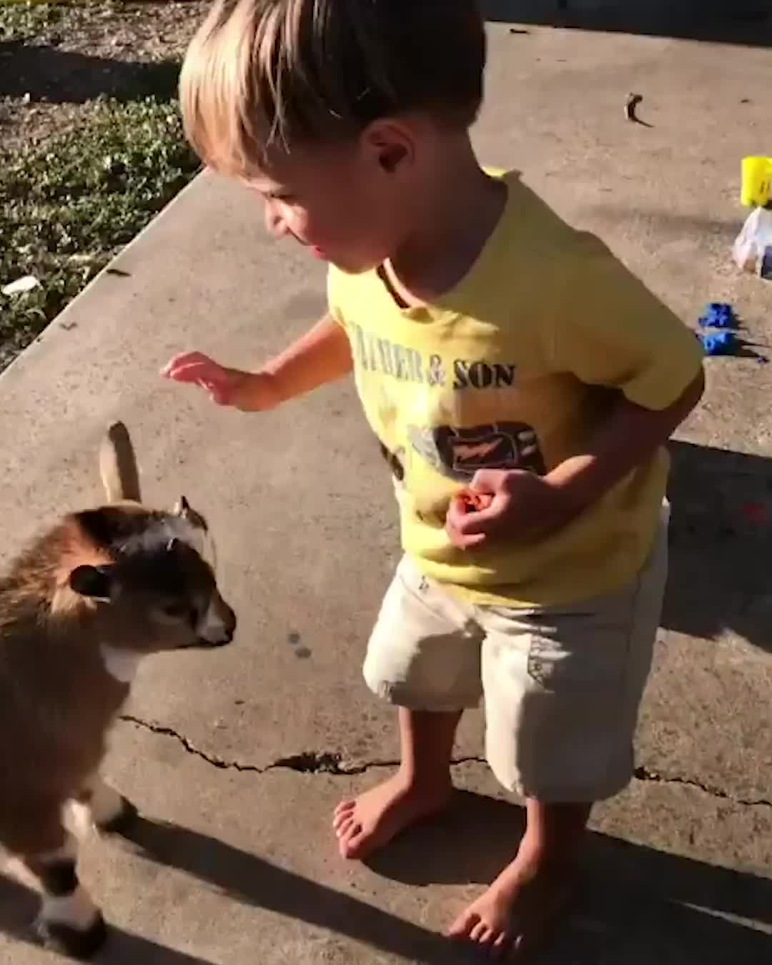 baby goat headbutts kid, This baby goat is an absolute savage 😂🐐 GIFs
