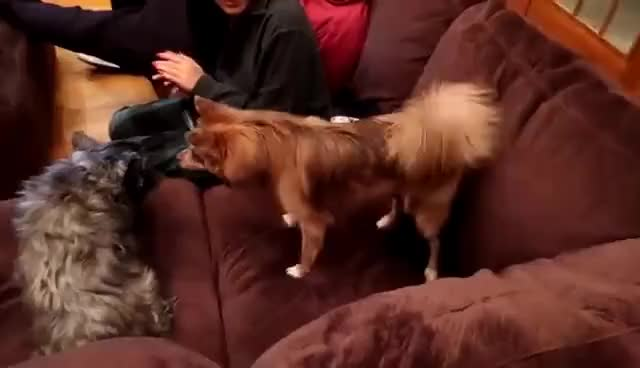 Watch and share MARBLE'S NEMESIS GIFs on Gfycat