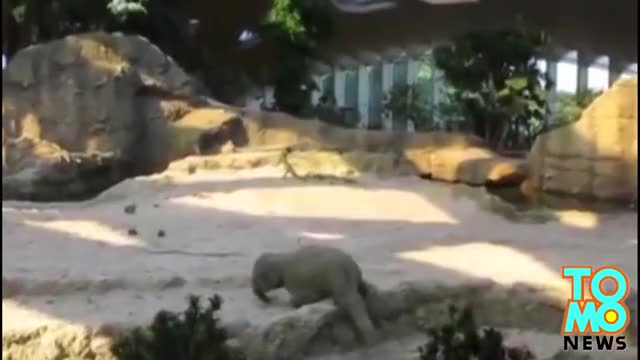 Watch Baby elephant falls, is saved by parents in adorable act caught on video at Zurich zoo GIF on Gfycat. Discover more ivory trade, news, taiwanese animators GIFs on Gfycat