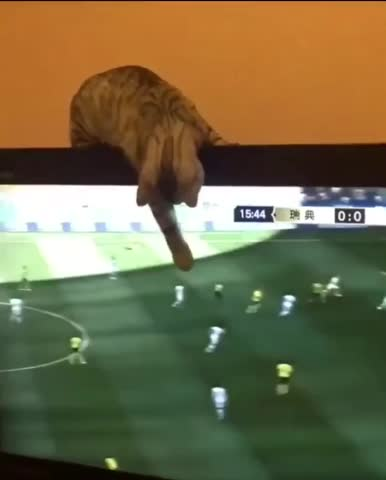 To Get the Ball therewasanattempt GIFs