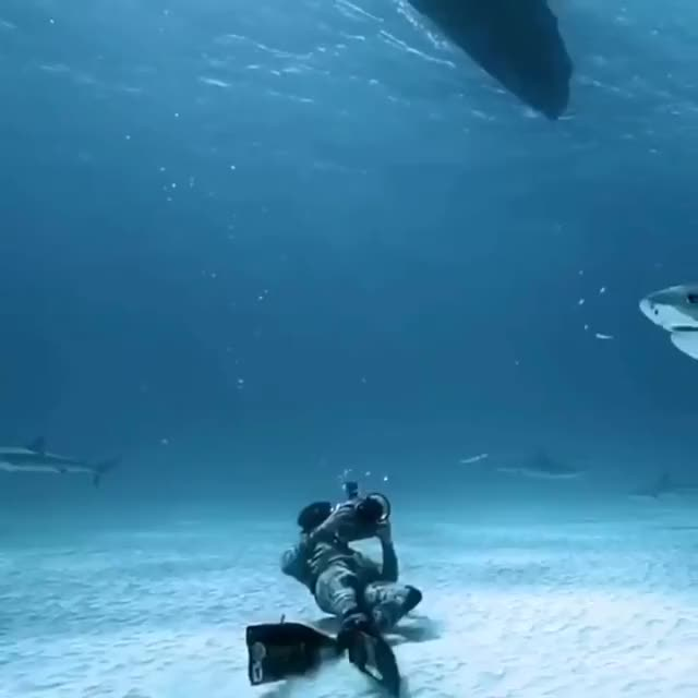 Watch and share Tiger Shark, Human For Scale GIFs by likkaon on Gfycat