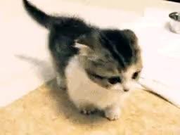 kittens GIFs