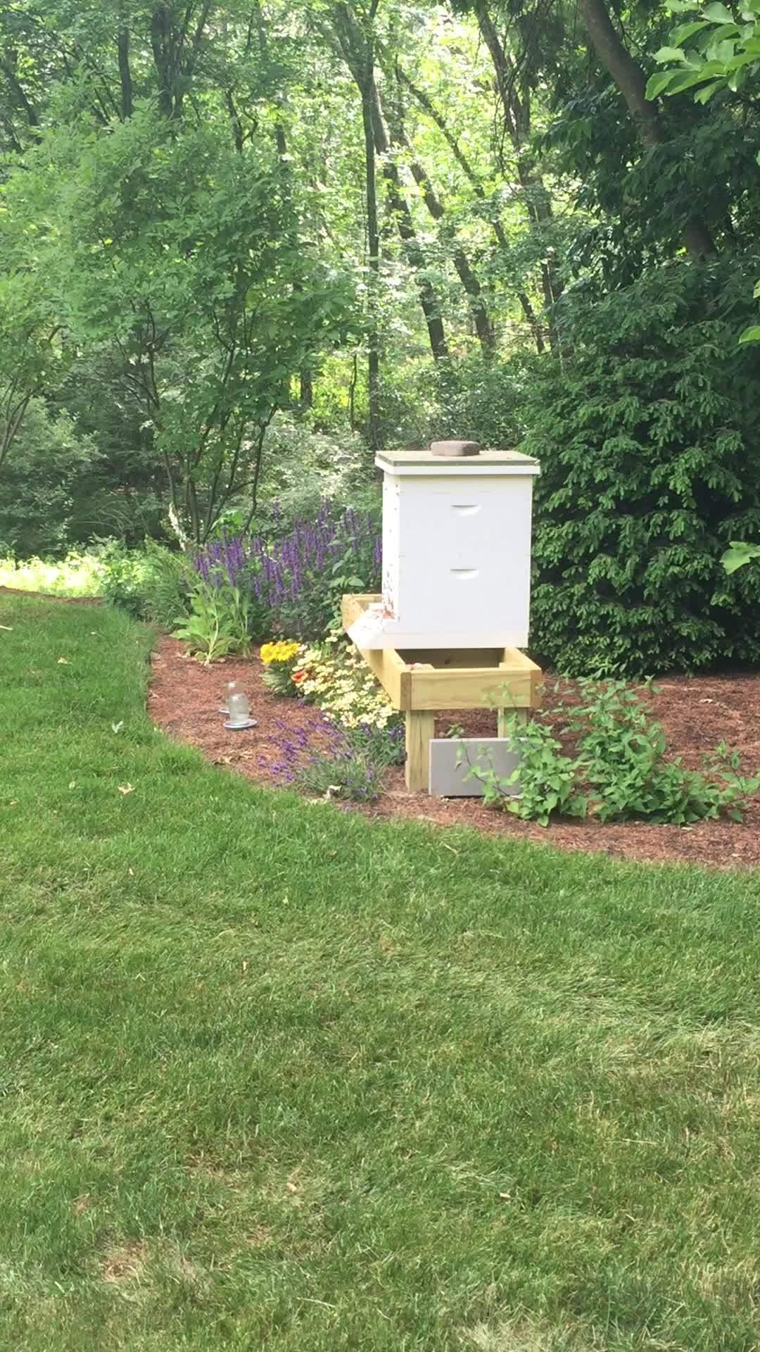 Bee, Bees, beekeeping, Bee swarm? GIFs
